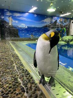 ペンギンさんの写真・画像素材[4230857]