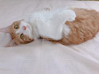 猫,動物,寝転ぶ,ペット,寝る,人物,可愛い,ネコ,ネコ科の動物