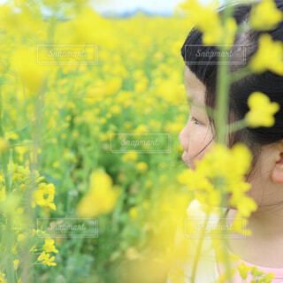 菜の花にかこまれての写真・画像素材[4295837]