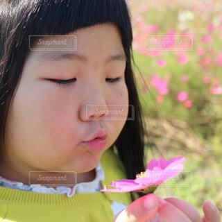 コスモスを愛でる女の子の写真・画像素材[4333909]