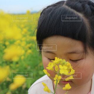 菜の花と女の子の写真・画像素材[4340427]