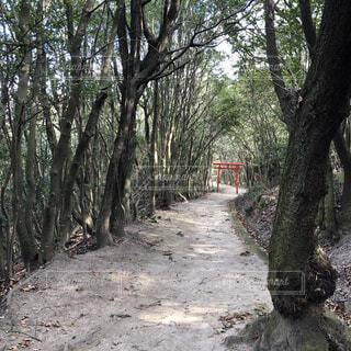 森の中の鳥居の写真・画像素材[4408006]
