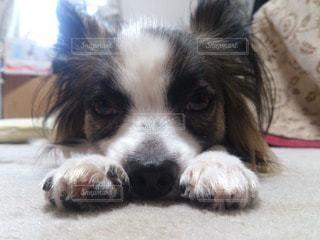 犬の写真・画像素材[44341]