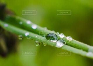 雨上がりの写真・画像素材[4708936]