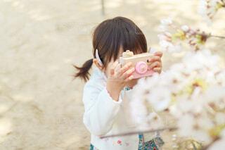 桜をトイカメラで撮影している女の子の写真・画像素材[4310000]