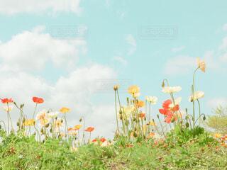 カラフルなお花畑と空の写真・画像素材[4310011]
