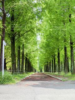 緑の公園の並木道の写真・画像素材[4409523]