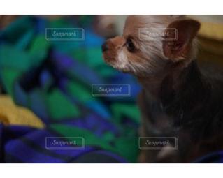 犬 - No.296695
