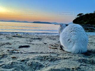猫,自然,海,空,屋外,ビーチ,水面