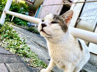 猫,動物,屋外,藍島