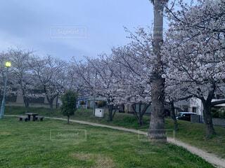 空,公園,花,屋外,草,樹木