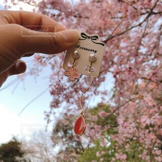 桜とハンドメイドアクセサリーの写真・画像素材[4279701]