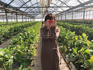 イチゴ狩りをする女性の写真・画像素材[4283030]