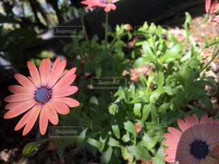 オーストラリアで見つけた綺麗な花の写真・画像素材[4285235]