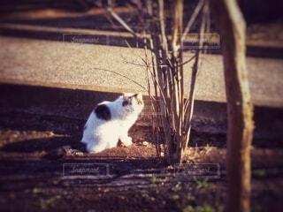 朝の公園でこちらを見る猫の写真・画像素材[4266171]