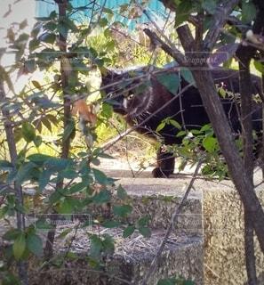枝の間からこちらを覗く黒猫の写真・画像素材[4266963]