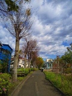 住宅街にある公園の朝の写真・画像素材[4325486]