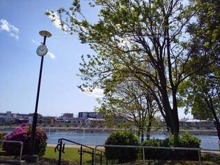 公園の時計と樹木の写真・画像素材[4345077]