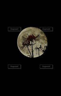 自然,風景,空,シルエット,月,彼岸花,曼珠沙華,月明かり,月光,十六夜