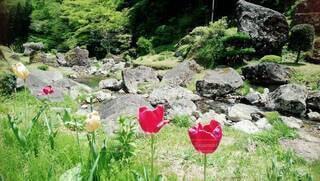 小川を散歩の写真・画像素材[4258967]