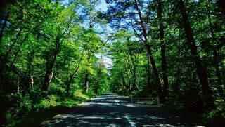 木と道の写真・画像素材[4258983]