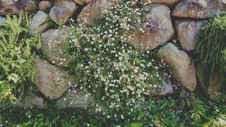 庭と緑の写真・画像素材[4375049]