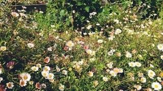 無造作な庭の写真・画像素材[4375068]