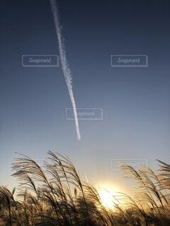 飛行機雲とすすきの写真・画像素材[4105683]