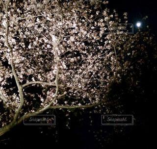 今宵は ーー夜風にふかれてーーの写真・画像素材[4276083]