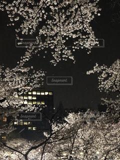 風景,桜,夜,千鳥ヶ淵,九段下