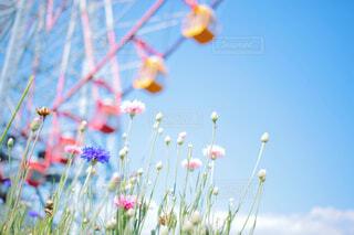 観覧車をバッグに咲く花の写真・画像素材[4297134]