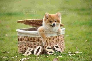 犬の写真・画像素材[42226]
