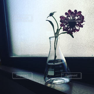窓際の一輪の花の写真・画像素材[4340595]