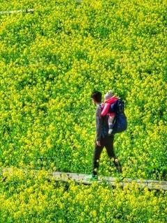 菜の花畑を散策する親子の写真・画像素材[4276003]