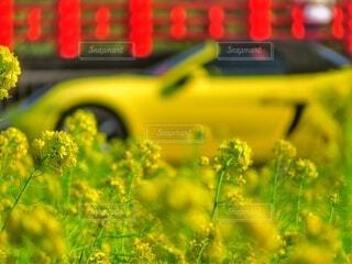 黄色のコラボの写真・画像素材[4352649]
