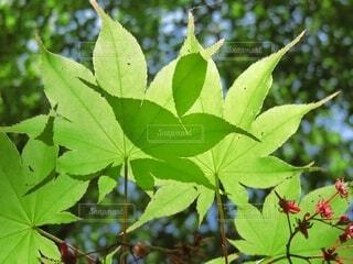 重なり合う葉の影の写真・画像素材[4461529]