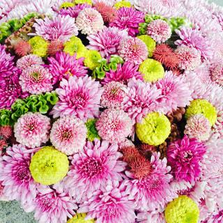 花の写真・画像素材[865847]