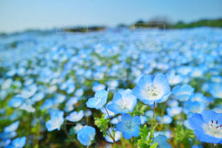 近くの花のアップの写真・画像素材[1314860]