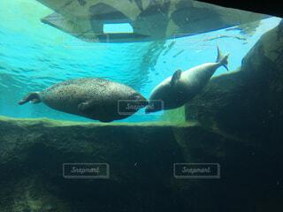 動物,魚,屋外,イルカ,水族館,水面,葉,水中,サメ,ダイビング,海獣,フィン