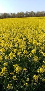 花,黄色,草木