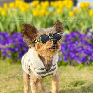 犬,花,動物,屋外,景色,草