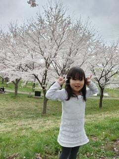 桜と少女の写真・画像素材[4278286]