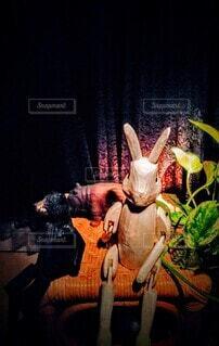 夜の動物の写真・画像素材[4416789]