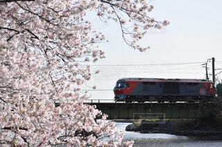 桜と機関車の写真・画像素材[4298759]