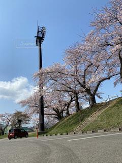 空,花,屋外,道路,樹木,通り