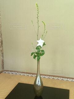 茶室の床の間に飾ってあった一輪の白い花の写真・画像素材[4317692]