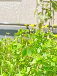 黄色の花の写真・画像素材[4320609]