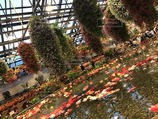 ひみつの花園の写真・画像素材[4316256]