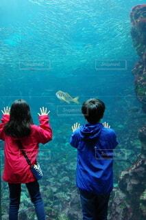 泳ぐ憧れの写真・画像素材[4644030]