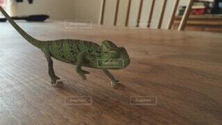 カメレオンの猪突猛進の写真・画像素材[4643992]